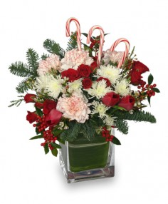 PEPPERMINT PLEASURES Christmas Bouquet in Skippack, PA | AN ENCHANTED FLORIST @ SKIPPACK VILLAGE