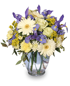 WELCOME BABY BOY Flower Arrangement in Milton, MA | MILTON FLOWER SHOP, INC
