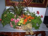 Blooming Plants Basket Any Occasion