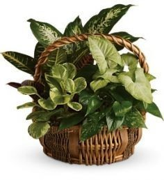 Emerald Garden Basket Plants in Medina, NY - CREEKSIDE FLORAL AND ...